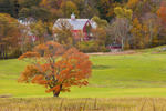 Red Barns in Autumn at High Valley Farm, Taconic Mountains Region, Copake Falls, NY