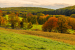 Grassy Fields and Trees with Foliage in Autumn at High Valley Farm, Taconic Mountains, Copake Falls, NY