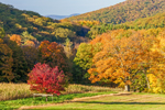 Fields, Forests, and Mountains in Autumn at High Valley Farm, Taconic Mountains, Copake Falls, NY