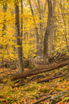 Mixed Hardwood Forest in Autumn at High Valley Farm, Taconic Mountains, Copake Falls, NY