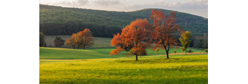 Late Evening Light on Red Maple Tree and Fields in Early Autumn at High Valley Farm, Taconic Mountains, Copake Falls, NY