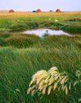 Prairie Pothole with Squirreltail Grass, Rushes, and Haystacks, Buchanan, ND