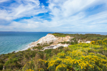 Goldenrods and Gay Head Cliffs, Martha's Vineyard, Aquinnah, MA