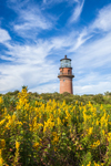 Gay Head Lighthouse with Goldenrods in Foreground, Martha's Vineyard, Aquinnah, MA