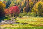 Fall Foiage along Number Nine Brook and Wetlands near Harriman Reservoir, Green Mountain National Forest, Whitingham, VT