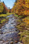 Fall Foliage along Rake Brook in Green Mountain National Forest, Somerset, VT
