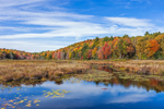 Benton Brook and Wetlands with Fall Foliage, Berkshire Mountains, Otis, MA