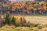Eugene Moran Wildlife Management Area and Windsor Brook Area in Autumn, Berkshire Mountains, Windsor, MA