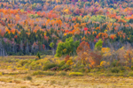Eugene Moran Wildlife Management Area and Windsor Brook Area in Autumn, Berkshire Mountains, Windsor, MA