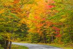 Trees with Fall Foliage along Country Road, Kenneth Dubuque Memorial State Forest, Berkshire Mountains, Hawley, MA