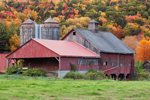 Old Red Barns in Autumn, Berkshire Mountains, Hawley, MA