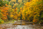 Colorful Fall Foliage in Forests along Green River, Colrain and Leyden, MA