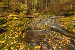 Tributary of Green River in Autumn, Colrain, MA