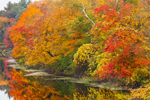 Fall Foliage along Shores of Charles River, Dover and Sherborn, MA