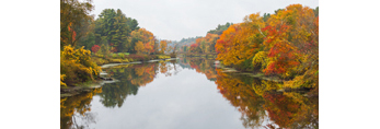 Trees with Fall Foliage Reflecting in Waters of Charles River, Dover and Sherborn, MA