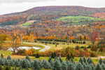 Overview of Tree Nurseries at Shagbark Farms with Taconic Mountains in Background, Taconic Mountains Region, Hillsdale, NY
