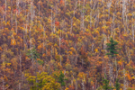 Fall Foliage on Mountainside of Blue Ridge Mountains, View from Skyline Drive, Shenandoah National Park, Rappahannock County, VA