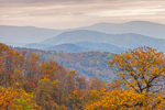 Mountain Layers and Fall Foliage Views from Skyline Drive, Shenandoah National Park, Rappahannock County, VA