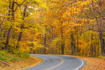 View of Skyline Drive through Hardwood Forests in Autumn, Shenandoah National Park, Warren County, VA