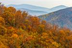 Fall Foliage on Mountainside of Blue Ridge Mountains, View from Skyline Drive, Shenandoah National Park, Rappahannock County, VA