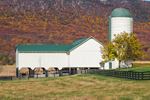 Barn on White House Farm in Autumn in Page Valley, Blue Ridge Mountains in Background, Shenandoah Valley, Luray, VA