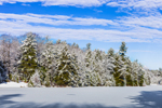 Snow-covered Woodlands along Edge of Frozen Larrys Pond, Richmond, NH