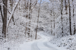 Country Road through Forests after Fresh Snowfall, Stafford, CT