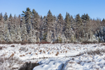 Stream, Wetlands and Forests after Fresh Snowfall, Marlow, NH