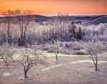 Sunrise over Rural Fruit Orchard after Ice Storm, Royalston, MA