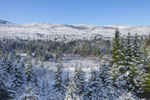 Spruce Trees and White Mountains after Snowfall, White Mountain National Forest, Carroll, NH