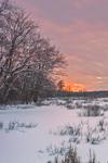 Wetlands along Sudbury River in Great Meadows National Wildlife Refuge, Sudbury, MA