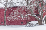Red Barn, Maple Tree, and Old Wagon in Snowstorm, Sudbury, MA