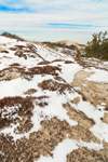 False Heather (Beach Heather) and Snow on Dunes near Chapin Beach, Cape Cod, Dennis, MA