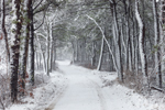 Country Road through Forest during Snowstorm, Felix Neck Wildlife Sanctuary, Martha's Vineyard, Edgartown, MA