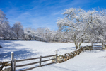 Wooden Fence, Stone Wall, Farm Fields, and Old Tree after Snowstorm, Martha's Vineyard, Chilmark, MA