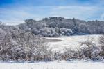 Backlit Duarte Ponds after Snowstorm, Martha's Vineyard, West Tisbury, MA