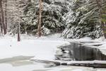 Wetlands after Snowstorm near Harvard Forest, Petersham, MA