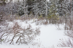 Wetlands near Flis Pond in Winter after Snowstorm, Winchendon, MA