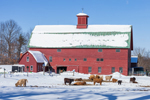 Big Red Barn with Scottish Highland Cows in Winter on Green Bough Farm, North Haverhill, NH