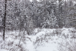 White Brook and Wetlands under Blanket of Snow, White Mountain National Forest, Albany, NH