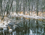 Red Maple Swamp along Tributary of East Branch of Ware River in Winter, Princeton, MA
