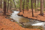 Gunn Brook in Early Spring Freshet Flowing through Hemlock and White Pine Forest, Connecticut River Valley, Sunderland, MA