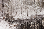 Forest Reflections at Horseshoe Pond after Early Spring Snowfall, Fitzwilliam, NH