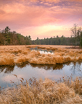 Heavy Frost in Freshwater Marsh along Lawrence Brook, Royalston, MA