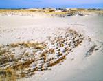 Dunes at Crane Beach, North Shore, Ipswich, MA