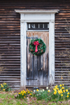 Natural Wood Door with Wreath and Daffodils, Royalston, MA
