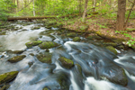 Brewer Brook Flows through Hardwood Forest on Bascom Hill Farm, Westhampton, MA