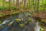 Brewer Brook Flows through Hardwood Forest on Bascom Hill Farm, Westhampton, MA