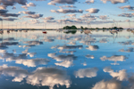 Sky Filled with Cumulus Clouds Reflecting in Calm Water of Pine Island Bay in Early Morning Light, off Fishers Island Sound, Groton, CT