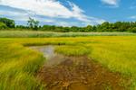 Tidal Pool and Salt Marsh, Narragansett Bay National Estuarine Research Reserve, Patience Island, Portsmouth, RI